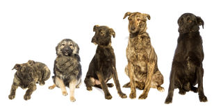 Insieme dei cani Fotografia Stock