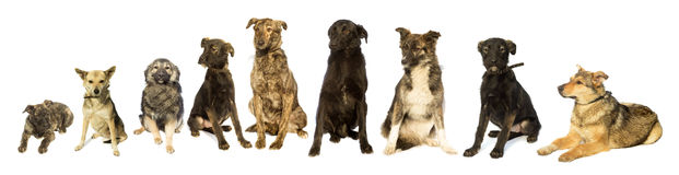 Insieme dei cani Immagine Stock Libera da Diritti