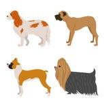 Insieme dei cani di razza Immagine Stock