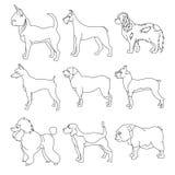 Insieme dei cani di razza nello stile lineare Fotografia Stock