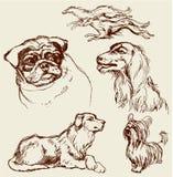 Insieme dei cani - labrador retriever, segugio, carlino, incastonatore, cagnolino - Fotografia Stock Libera da Diritti