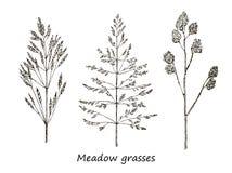 Insieme dei cereali del disegno dell'inchiostro, piante selvatiche, erbe del campo, illustrazione botanica dettagliata dei cereal Fotografia Stock Libera da Diritti