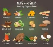 Insieme dei cereali e dei semi del dado illustrazione di stock