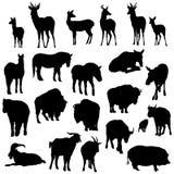 Insieme dei cervi, dei cavalli, delle capre, dei yaks, dei bufali e del maiale Immagini Stock