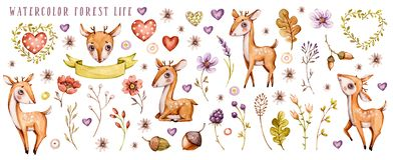 Insieme dei cervi e del wildflower del bambino dell'acquerello illustrazione vettoriale