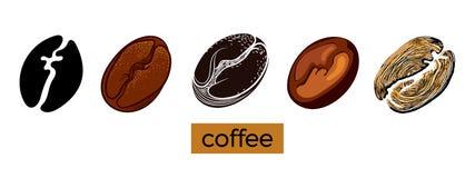 Insieme dei chicchi di caffè differenti su fondo bianco Raccolta di vettore abbozzo Immagine Stock Libera da Diritti