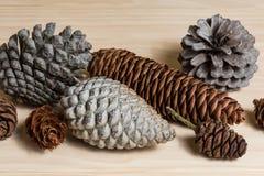 Insieme dei coni del pino Fotografia Stock