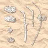 Insieme dei coni e dei rami differenti illustrazione vettoriale