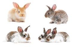 Insieme dei conigli di coniglietto del bambino Immagine Stock