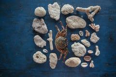 Insieme dei coralli e delle pietre dall'oceano in profondità e un piccolo granchio Il fermo di un collettore marino su una tavola Immagini Stock Libere da Diritti