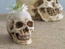 Insieme dei crani minuscoli nel telaio di legno variopinto Immagine Stock Libera da Diritti