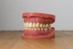 Insieme dei denti falsi artificiali Immagine Stock