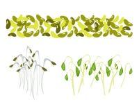 Insieme dei fagioli verdi e dei germogli Su fondo bianco Fotografie Stock
