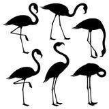Insieme dei fenicotteri neri illustrazione vettoriale