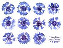 Insieme dei fiordalisi isolati Fiori blu Immagini Stock Libere da Diritti