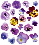 Insieme dei fiori Immagini Stock Libere da Diritti