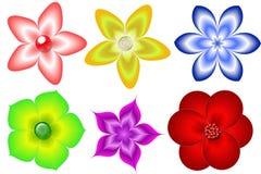 Insieme dei fiori Fotografia Stock Libera da Diritti