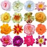 Insieme dei fiori Immagini Stock