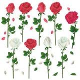 Insieme dei fiori bianchi e delle rose rosse sopra bianco Fotografia Stock Libera da Diritti