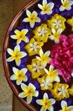 Insieme dei fiori di galleggiamento Immagini Stock Libere da Diritti