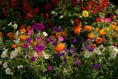 Insieme dei fiori colorati luminosi su un letto di fiore nel giardino Fotografia Stock