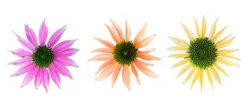 Insieme dei fiori con differenti colori Immagine Stock