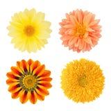 Insieme dei fiori con le dalie, il gazania ed il girasole Come elementi di progettazione Fotografia Stock Libera da Diritti