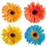 Insieme dei fiori del gerbera Immagine Stock
