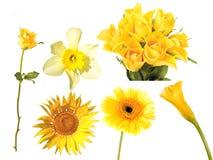 Insieme dei fiori del yeloow Fotografia Stock Libera da Diritti