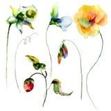 Insieme dei fiori dell'acquerello Fotografie Stock