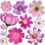 Insieme dei fiori dell'universo Fotografia Stock Libera da Diritti