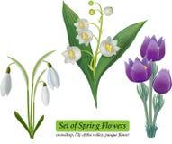 insieme dei fiori della molla isolati su fondo bianco Immagine Stock
