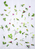 Insieme dei fiori della molla su fondo bianco Immagini Stock