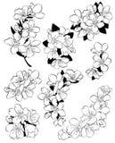 Insieme dei fiori di ciliegia Raccolta dei fiori di sakura Disegno in bianco e nero dei fiori della molla arte lineare tatuaggio royalty illustrazione gratis