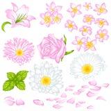 Insieme dei fiori differenti Fotografie Stock Libere da Diritti