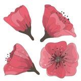 Insieme dei fiori disegnati a mano Fotografie Stock Libere da Diritti