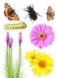 Insieme dei fiori e degli insetti Fotografie Stock
