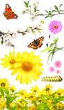 Insieme dei fiori e degli insetti Fotografia Stock