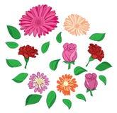 Insieme dei fiori e dei fogli Illustrazione Vettoriale