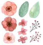 Insieme dei fiori e dei fogli Fotografia Stock