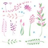 Insieme dei fiori e delle erbe illustrazione di stock