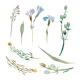 Insieme dei fiori e delle foglie blu dell'acquerello su fondo bianco Fotografia Stock