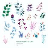Insieme dei fiori e delle foglie di vettore dell'acquerello Elementi floreali perfetti per i risparmi la carta di data Immagine Stock