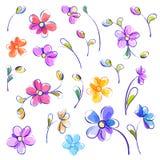 Insieme dei fiori isolati dell'acquerello Fotografia Stock