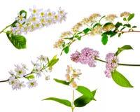 Insieme dei fiori isolati della sorgente Fotografie Stock Libere da Diritti