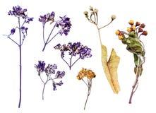 Insieme dei fiori secchi su bianco Fotografia Stock Libera da Diritti
