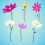Insieme dei fiori selvaggi di estate illustrazione di stock