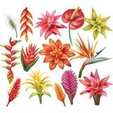 Insieme dei fiori tropicali royalty illustrazione gratis