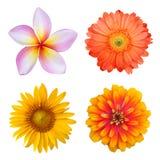 Insieme dei fiori variopinti Fotografie Stock