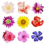 Insieme dei fiori variopinti Immagini Stock Libere da Diritti